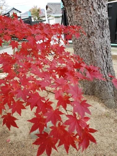 着物が映える紅葉の季節